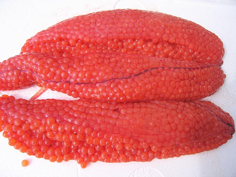 秋鮭の生筋子